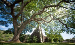 """大きな木がシンボル! ホノルルコミュニティ教会 で""""全員で楽しむ結婚式""""!"""