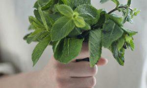 Herb bouquetってどう?